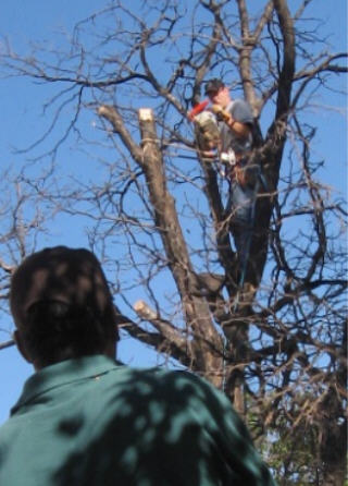 Amarillo Tree Service
