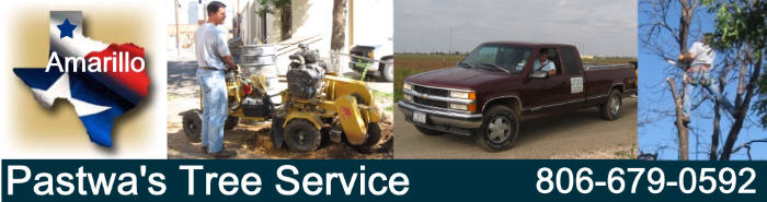 Amarillo TX tree service